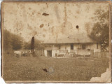 Casa Prahova copii vaci