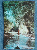 438 - Vedere din Delta Dunarii / carte postala RPR circulata 1963, Necirculata, Fotografie