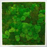 Tablou vegetal ARTFLORA Premium MixMoss 50x50cm