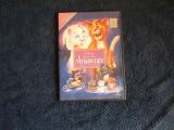 dvd pisicile aristrocate
