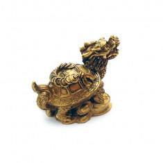 Testoase dragon cu pui si monede