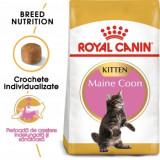 Royal Canin Maine Coon Kitten, pachet economic hrană uscată pisici junior, 2kg x 2