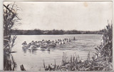 bnk cp Pelicani in Delta Dunarii - Vedere - circulata