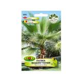 Seminte de arbust Florian palmier Washington 1 g