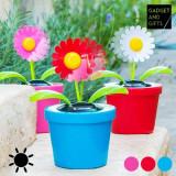 Cumpara ieftin Floare Decorativa Solara cu Miscare