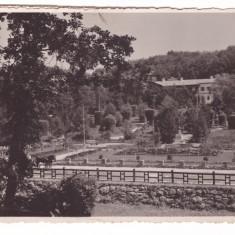 SOVATA-CARTE POSTALA ANII 30, Circulata, Fotografie
