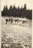 Fotografie sasi si cioban roman Transilvania 1932