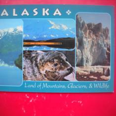 HOPCT 66748  ALASKA   -SUA-NECIRCULATA