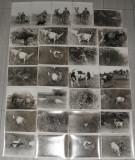 lot 50 fotografii,poze,fotografie alb negru peisaj rural,capre,vaci,cai,cioban