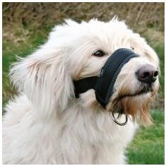 Botniță pentru câini – XXL