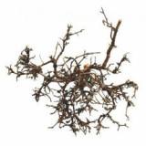 Decor terariu- arbust natural de deşert, 15 - 20m