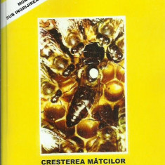 AS - RUTTNER - CRESTEREA MATCILOR