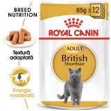 Royal Canin British Shorthair Adult 1 Plic X 85 gr
