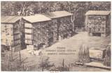 4825 - PANCOTA, Arad, Bees Apiary - old PRIVATE postcard - used - 1914, Circulata, Printata