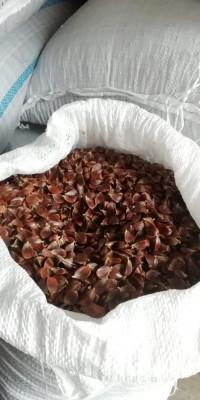 Jir de fag (semințe) JIR foto