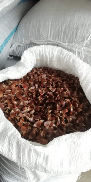 Jir de fag (semințe) JIR