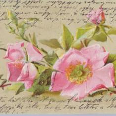 Flori 1909 - litografie circulata