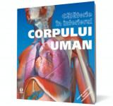 Călătorie în interiorul corpului uman, ART