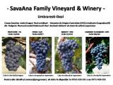 Struguri Rosii DOC/IG destinati obtinerii de vinuri de calitate