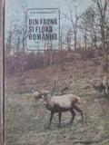 DIN FAUNA SI FLORA ROMANIEI-ION SIMIONESCU