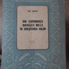 DIN EXPERIENTA BRIGAZII MELE IN CRESTEREA OILOR - GH. BANU