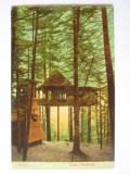 Rara! Sinaia-Cuibul Prințesei,carte postala color circulata 1908, Printata