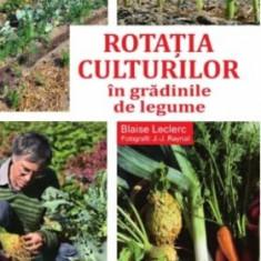 Rotaţia culturilor în grădina de legume, 2019