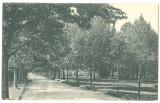 SV * Baia Mare * VEDERE PARTIALA A PARCULUI * anii '20, Circulata, Necirculata, Fotografie, Printata, Baia Sprie