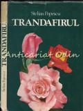 Cumpara ieftin Trandafirul - Stelian Popescu