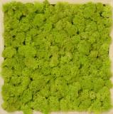 Tablou Artflora licheni stabilizati rama lemn 25x25CM