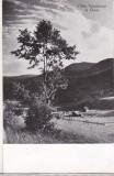 Bnk cp Valea Teleajenului la Cheia - Vedere - circulata, Printata