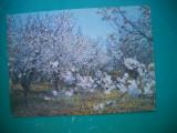 HOPCT 56112  INFLORESC LIVEZILE  -MOLDOVA / BASARABIA-NECIRCULATA