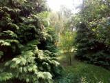 Teren mare , cu pomi fructiferi, tuia, fundatie pentru casā cu pivnitā, vie...