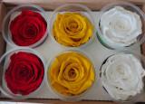 Trandafiri criogenati XL