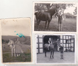 bnk foto Fotografii cu cai