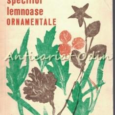 Cultura Speciilor Lemnoase Ornamentale - Stefan V. Purcelean