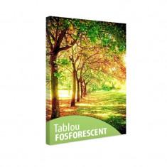 Tablou fosforescent Rand de copaci