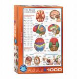 Cumpara ieftin Puzzle Eurographics - The Brain, 1000 piese