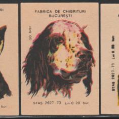 Caini de rasa - Set 3 etichete chibrituri romanesti, RSR an 1979