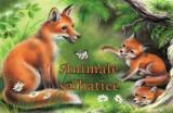 Animale salbatice/***, Aquila `93