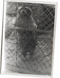 D720 Raton Viena Parcul Zoologic iunie 1945 militar roman front
