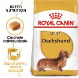 Royal Canin DACHSHUND Adult Hrana Uscata Caine