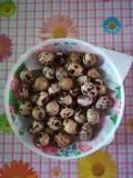 Vând oua de prepeliță pentru consum