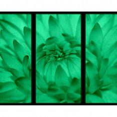Set tablou 3 piese fosforescent Floarea se deschide