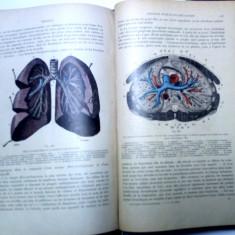 carte veche si rara tratat de anatomie Testut 1912 medicina