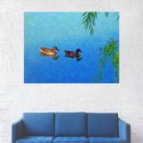 Tablou Canvas, Rate Maro pe Lac - 80 x 100 cm