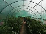 3x8m SOLAR DE GRADINA, Sera, Tunel, Solarii, Sere legume de vanzare flori - NOU