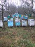60 Familii de albine . Pret negociabil