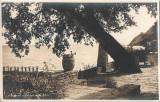 Carte postala Pavilionul castelului regal Balcic, Necirculata, Printata