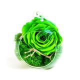 Cumpara ieftin Aranjament trandafiri criogenati MF253